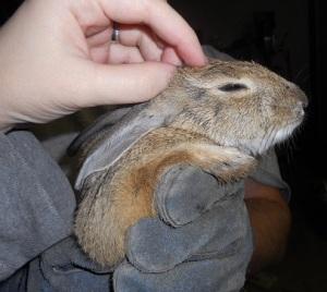 Somebunny likes pets